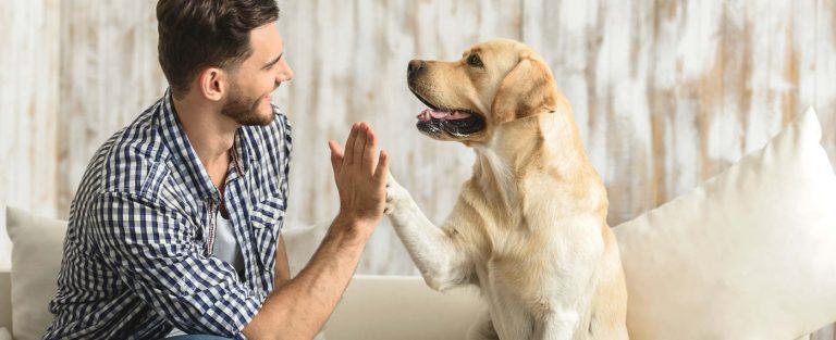 Felismerik-e a kutyák a gazdájuk szándékait?