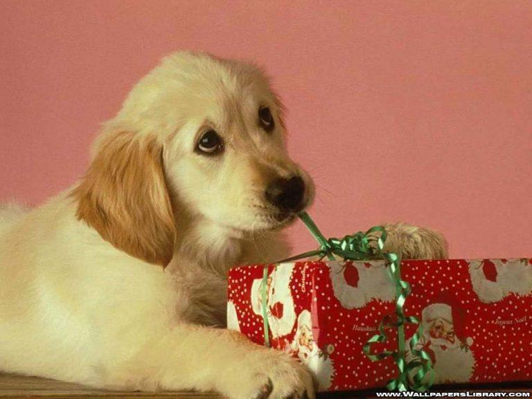 Itt az első karácsonyi dal, amit kutyáknak írtak!