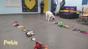 Menhelyi kutyák választhatták kis saját karácsonyi ajándékukat (Videó)