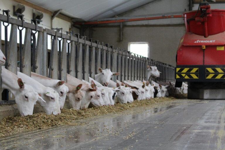 Üvegházhatású gázból készít állati takarmányt egy cég