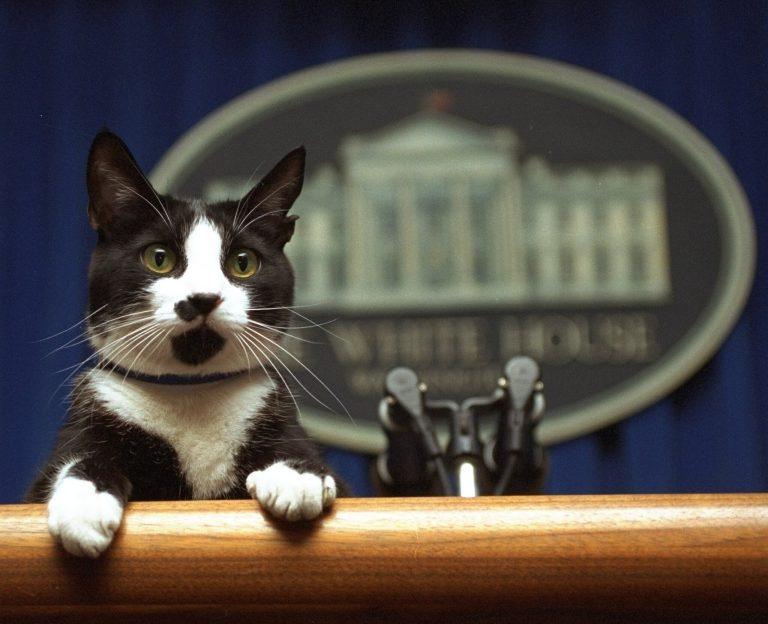 A Biden házaspárral egy cica is beköltözik a Fehér Házba