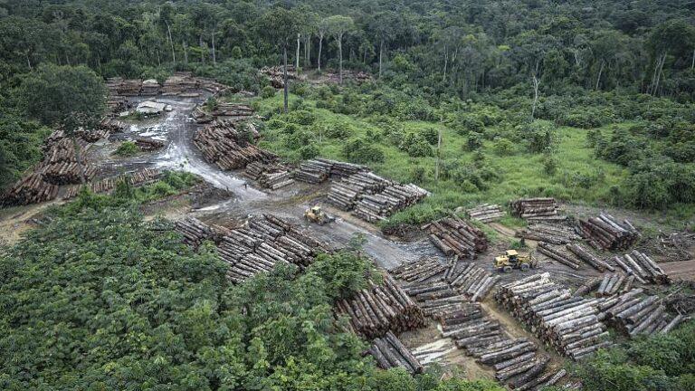 CO2-elnyelőből CO2-kibocsátóvá válnak Brazília erdei
