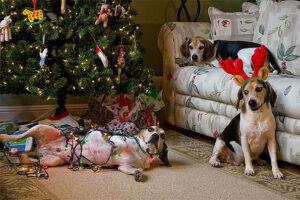 30 kutya és macska, akik szétverték a karácsonyt