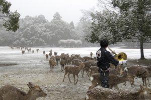 Élő streamben követhető a csodálatos japán szarvasünnep