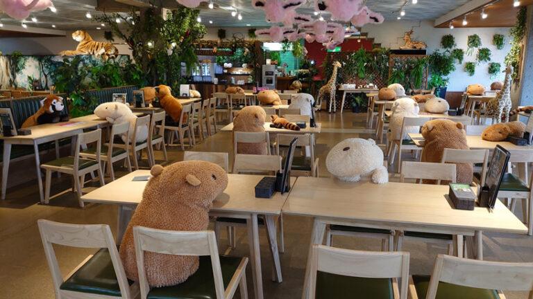 Egy japán állatkert vízidisznókkal oldja meg a társadalmi távolságtartást