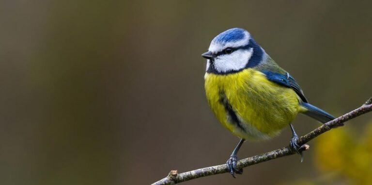A madarak éneke is képes felemelni a lelket – VIDEÓ