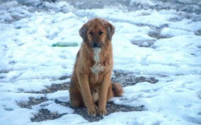 USA: Hét év börtönt is kaphat, aki nem biztosít menedéket a fagy elől kutyájának