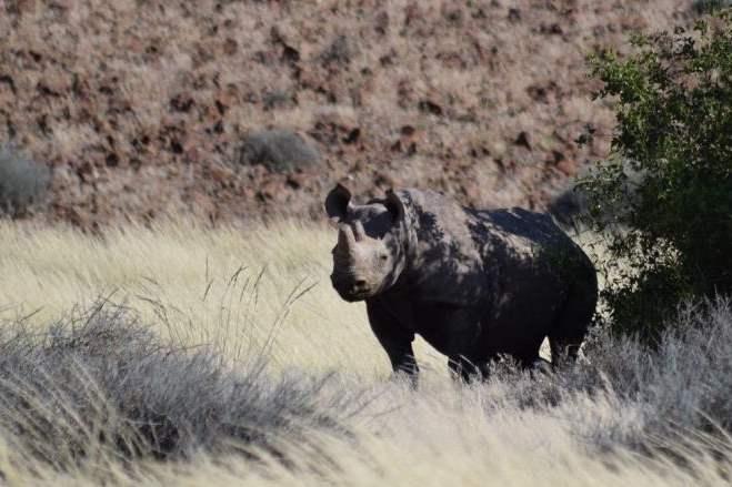 Visszaszorulóban az orvvadászat Namíbiában