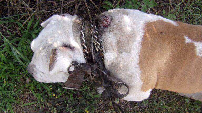 Eltiltották az állattartástól az állatkínzót