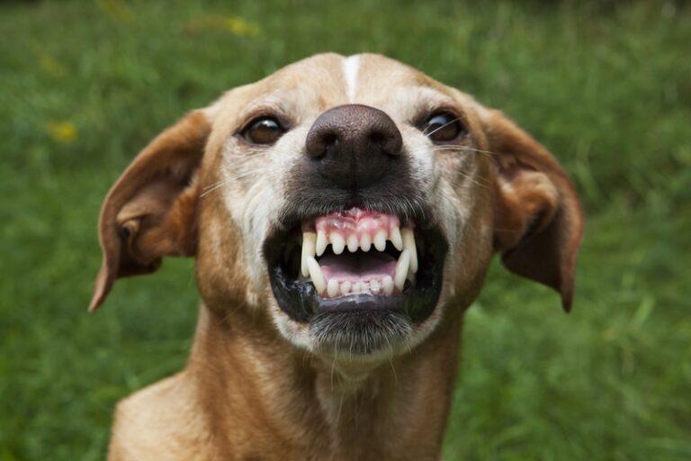 A kutyák tényleg tudják, hogy ki rossz ember