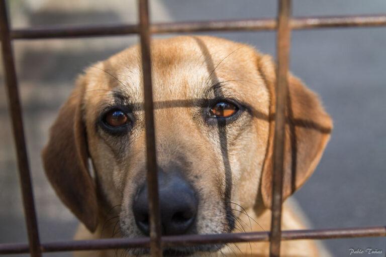 Tíz példamutató állatvédelmi törvény a nagyvilágból