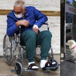 Napokig várta gazdáját a kórház előtt egy kutya
