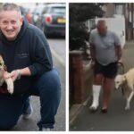 Bevitték az állatorvoshoz a sánta kutyát: kiderült, csak bicegő gazdáját utánozta