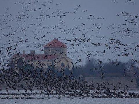 Miért tűntek el a vadludak a tatai Öreg-tóról?