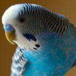 Ez a kis papagáj lehet a világ legokosabb madara? – videó!