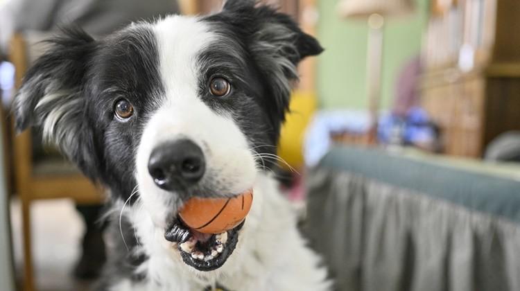 A kutya ilyen gyorsan tanul meg egy új szót