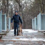 Illegális kutyaviadalok: magyar rendőrök adnak otthont a bántalmazott állatoknak