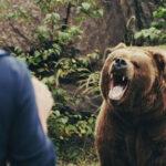 Rémület a sípályán: medve üldözött egy síelőt – videó