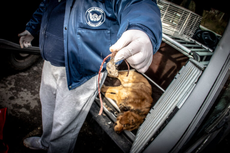 Altatólövedékkel fogták be a nyakába nőtt madzaggal szenvedő kutyát