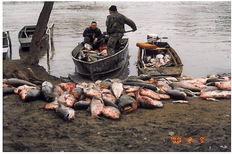 A Tisza-völgy Csernobilja – 21 éve történt a cianidszennyezés