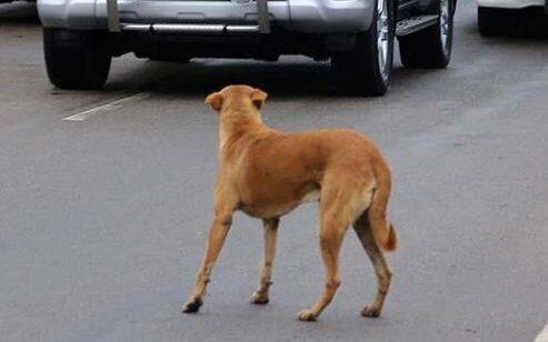 Szándékosan halálra gázolt egy kutyát