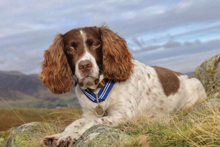 Érdemrendet kapott Max, az emberek ezrein segítő kutya (Videóval)