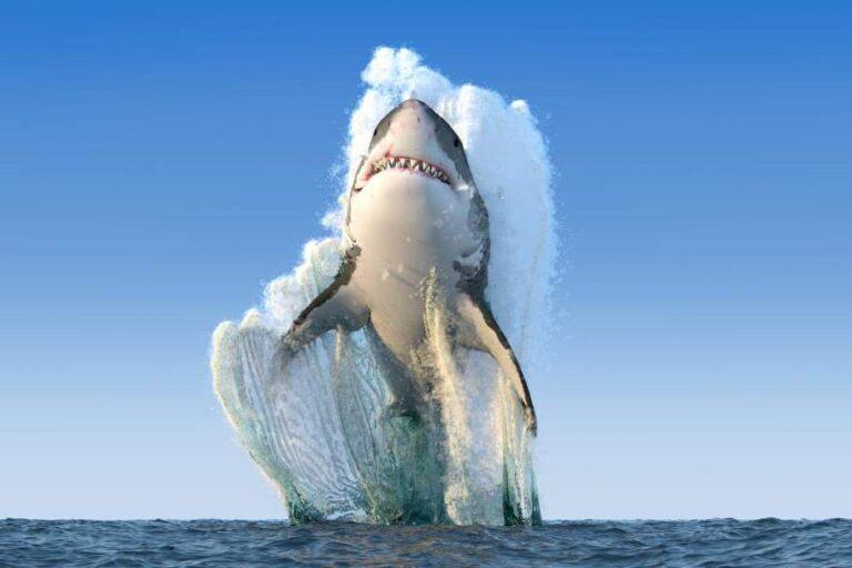 A cápák már érzik, hogy melegszik a víz