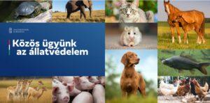 Konzultáció az állatvédelemről – pár perc alatt kitölthető kérdőívvel és videóval