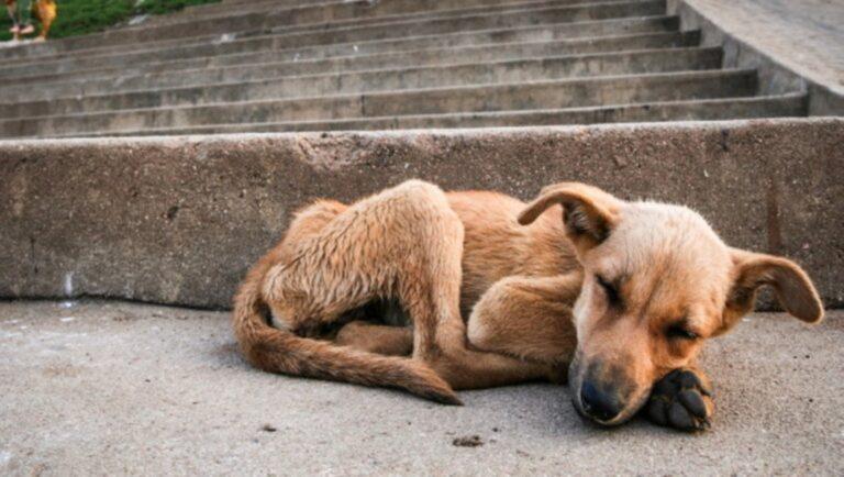 Az állatokkal való bánásmód legfontosabb előírásai