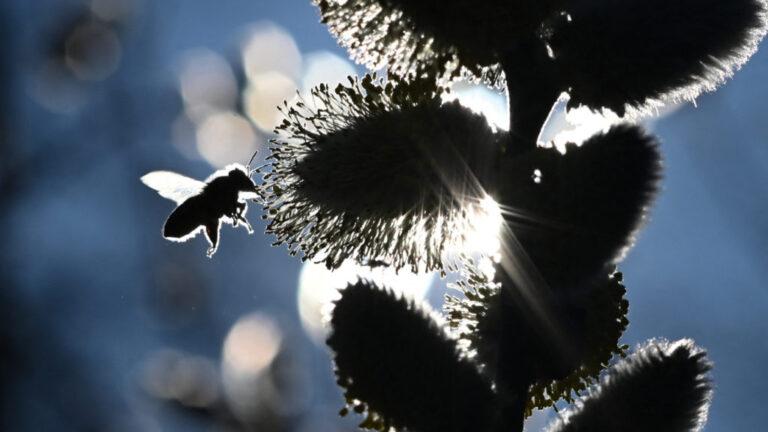 Fontos rovarok ébredeznek az országban