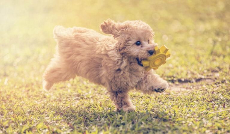 Ingyenes állami képzés indul kutyatartóknak