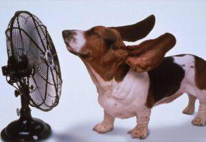 Nem vicc: Németországban a kutyákat is felelőssé teszik a klímaváltozásért