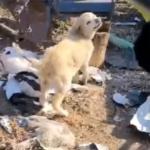 A horrortanyáról mentett kutyakölyök gyógyulására gyűjt az állatotthon