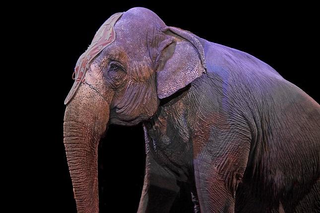 Az állatkínzás szigorú büntetését és a vadállatok cirkuszi szereplésének betiltását is elsöprő többség támogatja