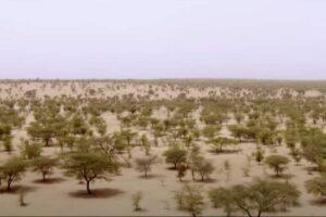 A Nagy Zöld Fal dzsungeltervként elbukott, de szavannaként él (Videó)