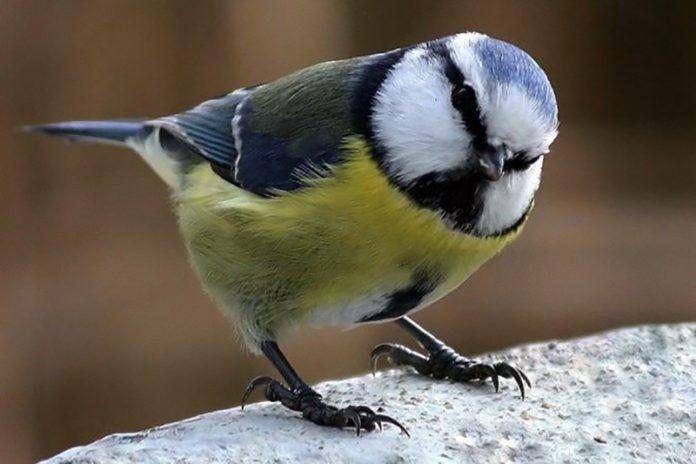 A tudósok szerint boldogabbak vagyunk, ha madarak vesznek minket körbe