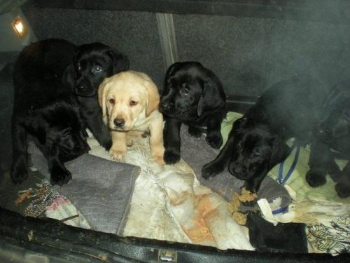 Hatalmas bírság a kutyakereskedőnek és a szaporítónak