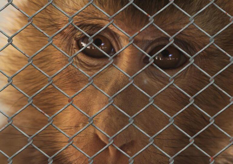 Petíció indult az európai uniós állatjóléti biztos kinevezéséért