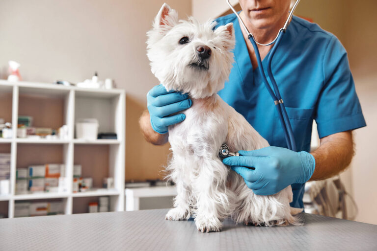Gyorshír: az állatorvosi rendelők nyitva maradnak a lezárások ellenére is