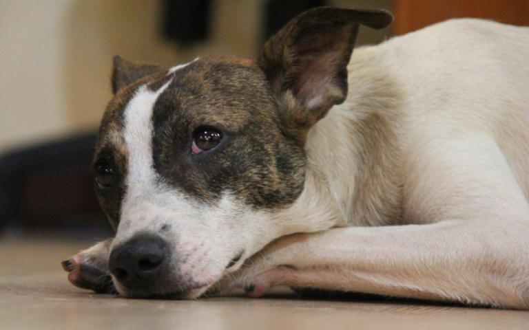 Brutális állatkínzás: motorkerékpár után kötötték a két megkínzott kutyát
