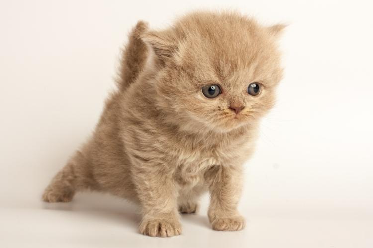 A macskák valóban felismerik gazdáik hangját… csak nem vesznek róla tudomást