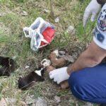 Sorsukra hagyott, szatyorba zárt kiskutyák életét mentették meg a rendőrök