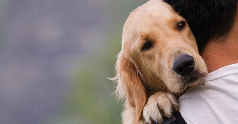 Féregtelenítés: így védheted meg a kutyádat a betegségektől