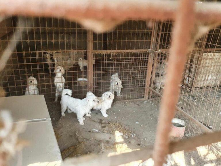 1400 kóbor kutyát tervez ivartalanítani a Nébih