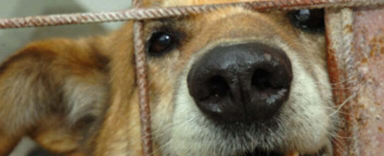 Háromszor is megpróbálta megölni a szomszéd kutyáját, vallomást tett