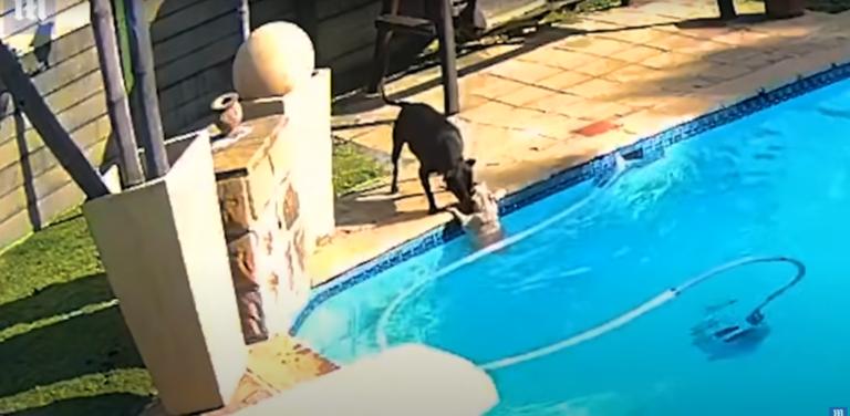 Fél órán át küzdött társa életéért ez a kutya