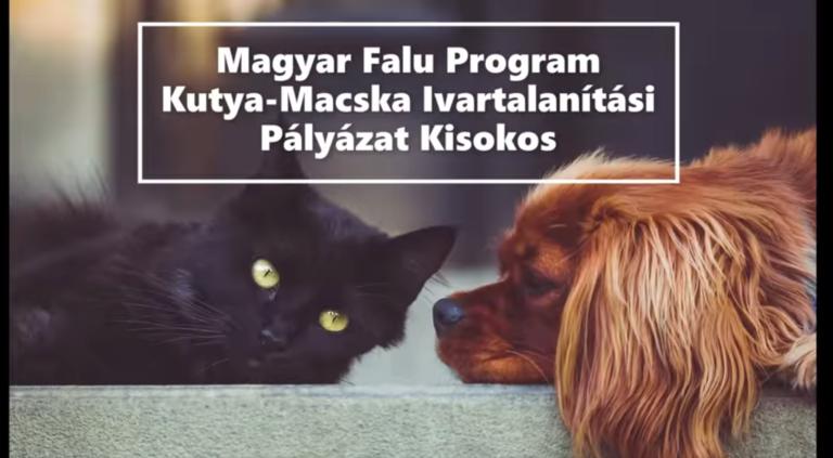 Kutya-Macska Ivartalanítási Akció Kisokos a Magyar Falu Program friss pályázata kapcsán