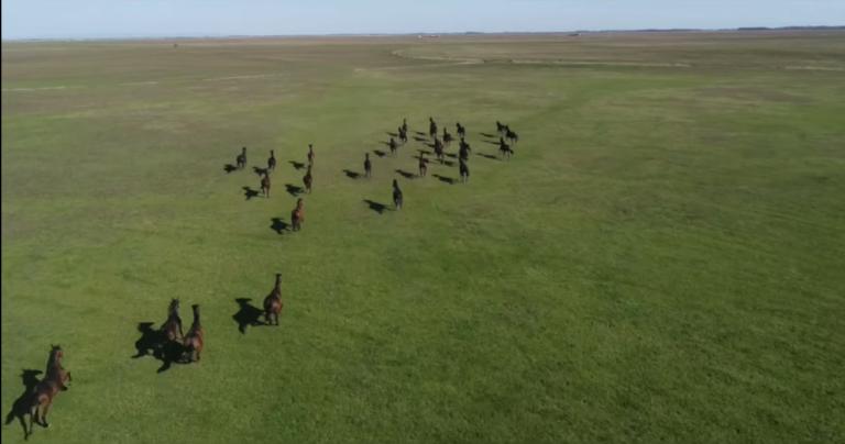Gyöngyörű videó a mátai ménes kihajtásáról