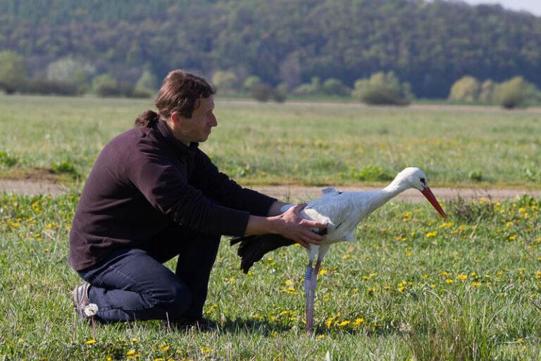 Így beszélget egymással az ember és a gólya + VIDEÓVAL