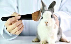 Te is tehetsz az indokolatlan állatkísérletek visszaszorításáért!